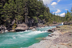 Rocky Riverbank in una foresta sempreverde fotografie stock libere da diritti