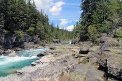 Rocky Riverbank in una foresta sempreverde fotografia stock