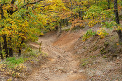 Rocky road in mountain forest at fall season Stock Photos