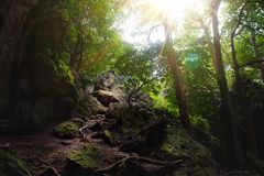 Rocky road pathway fill with sunlight in the middle of dense forest/jungle cover with high tree. stock photography