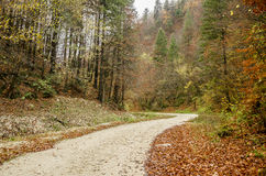 Rocky road in Prahova Valley. Colorful autumn picture of a rocky road in Zarnesti, Prahova Valley, Romania Royalty Free Stock Photos