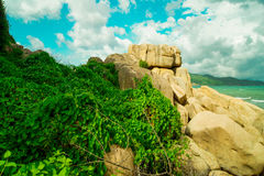 Rocky sea shore. Covered with greenery Royalty Free Stock Photo