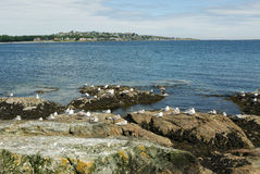Rocky sea shore in victoria Stock Photography