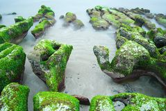 Rocky Seacoast full of green seaweed Stock Image