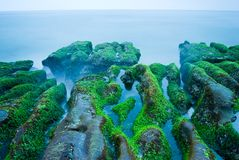 Rocky Seacoast full of green seaweed Royalty Free Stock Image