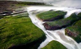 Rocky Seacoast full of green seaweed Stock Image
