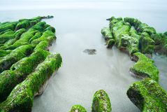Rocky Seacoast full of green seaweed Stock Photos