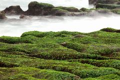 Rocky Seacoast full of green seaweed Royalty Free Stock Photo
