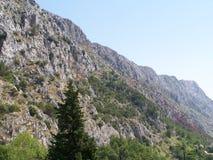 Rocky Seacost i Kroatien Royaltyfria Bilder