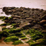 Rocky seascape with seaweeds in Waterville, County Kerry - vintage effect. Royalty Free Stock Image
