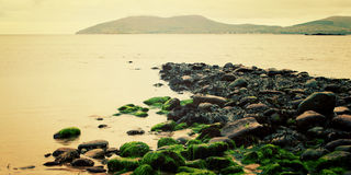 Rocky seascape with seaweeds in Waterville, County Kerry. Royalty Free Stock Photos
