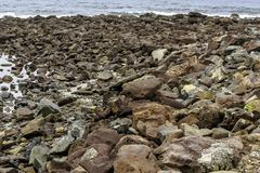 Rocky Seashore with shells and ocean royalty free stock photography