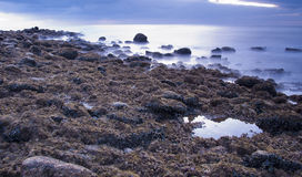Rocky Shore. Line in the early morning Royalty Free Stock Photo