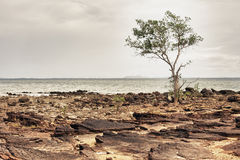 Rocky Shore Stock Photography