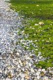 Rocky Shore Fluorescent Sea Plants Stock Foto