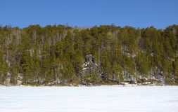 Rocky shore of the frozen river with tall pine trees royalty free stock images