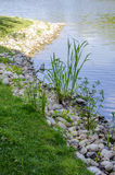 Rocky shore. The grass on the Bank near the river Royalty Free Stock Image