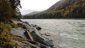 Rocky shore of a mountain river Katun in Altay. The rocky shore of a mountain river Katun in Altay, Russia stock video