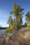 Rocky shore with pine trees on a Boundary Waters lake royalty free stock photo