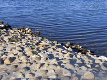 Rocky shore of river. Water's edge Royalty Free Stock Image