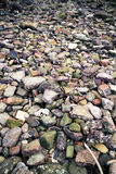 Rocky Shore Royalty Free Stock Image