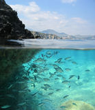 Rocky shore with school of fish underwater France Royalty Free Stock Image