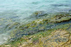 Rocky shore under a layer of sea water. Closeup Royalty Free Stock Images