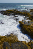 Rocky shore. Stock Image