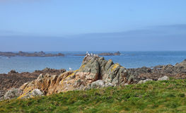 Rocky shoreline on the Channel Isalnd of Guernsey Royalty Free Stock Images