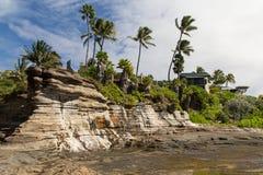 Rocky Shoreline com as palmeiras no vento Fotografia de Stock