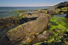 Rocky shoreline covered with green algae. Rocky shoreline covered with various green algae Stock Photo