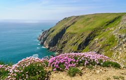 Rocky shoreline of the Island of Lundy off Devon. Flowers frame the cliffs of Lundy Island off the coast of Devon royalty free stock images