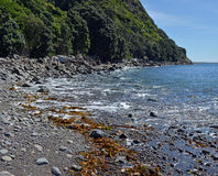 The rocky shoreline of Kapiti Island Bird Sanctuary, New Zealand. In the foeground are pristine waters and freshly dumped seaweed, shells and rocks Royalty Free Stock Photography