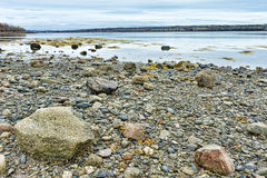 Rocky shoreline at low tide on the coast of Maine Royalty Free Stock Photo