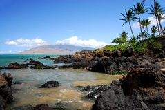 Rocky Shoreline With Palm Tree Royalty Free Stock Photography