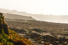 Rocky shoreline in Portugal covered in different layers of mist. On a cold, windy day. A colorful plant is located to the left and In the distance some trees Stock Images