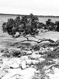 Rocky Shores en blanco y negro Imagen de archivo libre de regalías