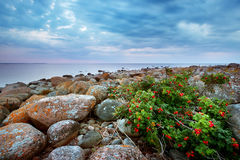 Rocky shores at the sea Stock Images