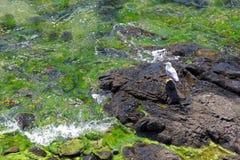 Rocky shores & seagull Royalty Free Stock Photos