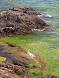 Rocky shores & seaweed Stock Photo