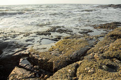 The rocky shores. Royalty Free Stock Image