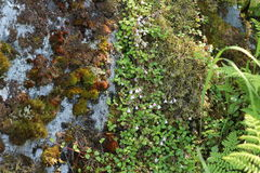Rocky slope. Covered with moss and vegetation Royalty Free Stock Photo
