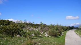 Rocky soil in the mountains, where trees grow. Flowers and trees. In Montenegro stock video
