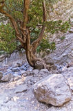 Rocky soil of Samaria gorge Stock Photography
