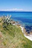 Rocky stone beach and agave in island Susak,Croatia Stock Photo