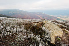 Rocky stone with frozen grass on Carpathians mountains. Royalty Free Stock Photo