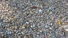 Rocky, stony texture background. With dry leaves Royalty Free Stock Photo