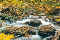 Rocky Stream Immagine Stock