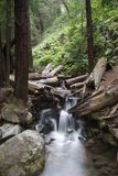 Rocky Stream. Flowing water through the forest, Limekiln State Park California royalty free stock photography