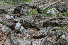Rocky stream bed of the mountain parched river in the forest on the way to The Grand Canyon of Crimea.  royalty free stock image